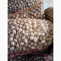 Продам грецкий орех урожай 2018 г