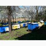 Продам бджолопакеты