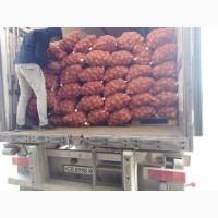 Продам картофель оптом KazAgroTrade
