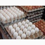 Предлагаем Яйцо С1 С2 Оптом Розницу