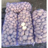 Продам картофель сорт Гранада калибр 7-8