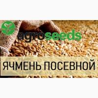 Семена. Производитель. Ячмень, Вакула, Командор, Всесвит, Галичанин