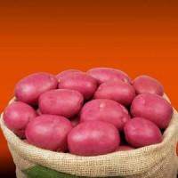 Элитный семенной картофель Голландия 1Р