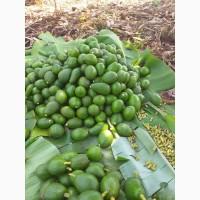Овокадо з Кенії, Уганди