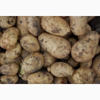 Продам белорусский картофель
