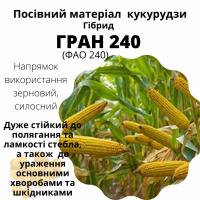 Пропонуємо насіння гібридів кукурудзи, ГРАН 240