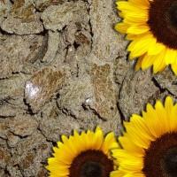 Куплю жмых соняшниковий