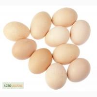 Продам яйця столові курячі С-1, С-2.