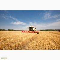 Услуги уборки урожая по Украине комбайнами