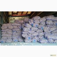 Продам картофель семенной Ривьера 3-3, 5 см