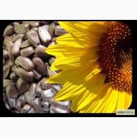 Продаю посівний матеріал соняшника