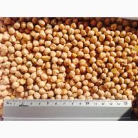 Нут семенной сорт Буджак, Заховит, Иордан
