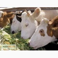 Хозяйство предлагает сено луговое и сено люцерны с доставкой по Украине