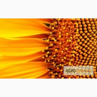 Посевной материал Подсолнечник Соняшник Украинское солнышко