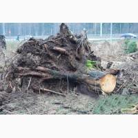 Спил, раскорчевка, корчевание старых садов