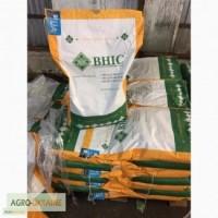 Атилла - засухоустойчивый, урожайный гибрид подсолнуха