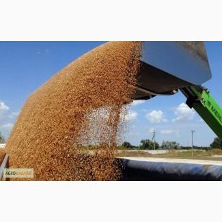 Производим приёмку С/Х Пшеницу разноклассовую