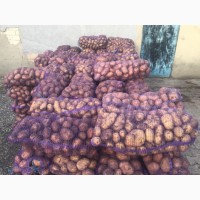 Продам картошку оптом, сорт белорос