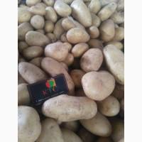 Продам картофель из Египта