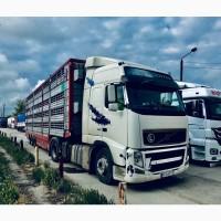 Послуги з перевезення худоби ( Услуги скотовоза ) Турція, Грузія, Узбекистан