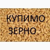 Закуповлюєм пшеницю 2кл-3клас відповідно до Держстандарту