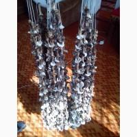Продам грибы старые сушаные белые 700 грн за кг есть 4 кг (также есть не белые)