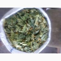 Продам цвет липы с листьями 100 кг