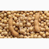 Семена сои УЛЬТРА под гербицид 1 репрод