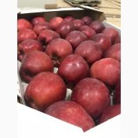 Продам яблуко 4 сортів: Голден, Ред Чіф, Фуджі, Грені Сміт