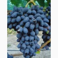 Продам саженцы винограда. Лучшие сорта