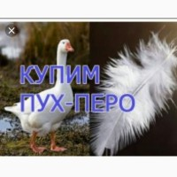 Закупаем пух перо гуся и утки по Украине