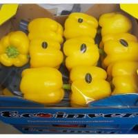 Перец Сладкий красный, желтый, зеленый, оранжевый, сорт КАЛИФОРНИЯ. Производитель Испания