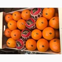 Апельсины сорта Вашингтон Навел
