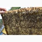 Продам бджолопакеты 700, штук
