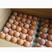 Яйцо столовое С1, крупным и мелким оптом от 5 ящиков, белое и коричневое, всегда свежее
