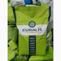 Семена подсолнечника Евралис Белла (Euralis ЕС БЕЛЛА, Бела)