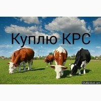 Заготовка на выгодных условия КРС коров быков телок свиней