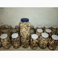 Продам оптом білі гриби