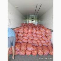 Оптовая база закупает (лук, свекла, морковь, капуста) первого сорта оптом