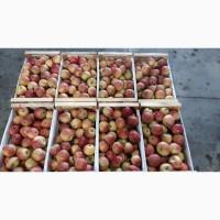 Продажа яблок, урожай 2021 г. Калибры: 65