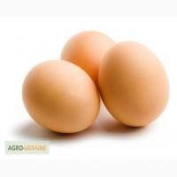 Продам столовое яйцо оптом