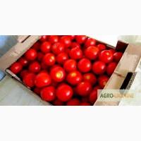 Помидорная тара, лоток для помидоров