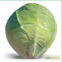 Семена белокочанной капусты HITOMI F1 / ХИТОМИ F1 фирмы Китано