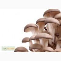 Продам грибы вёшенка, оптом и в розницу