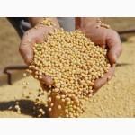 СРОЧНО Продам семена СОИ Канадский трансгенный сорт сои SEDNA