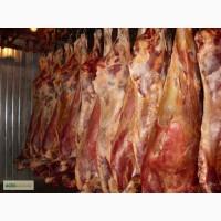 Куплю говядину в полутушах на Беларусь