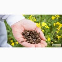Подмор пчелиный лекарственный - 1гр за 1грн. 098 852-74-73 050 778-08-89