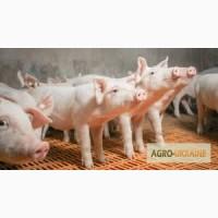 Продажа фермерского комплекса для производства свиней, разведения КРС или молоч. стада