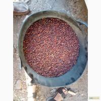 Купим круглый год сухие плоды Боярышника, шиповника
