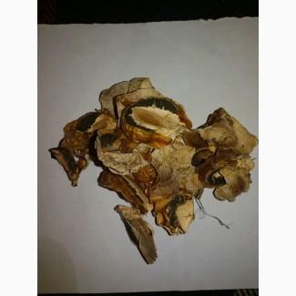Продам гриб веселка сушеный